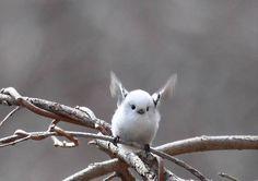 俺が少しずつ集めてきた動物の可愛い画像を放出したい : ハムスター速報