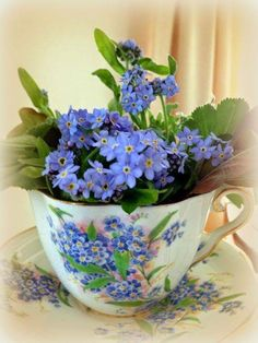 Forget-Me-Not Bouquet - - Blue Flowers, Wild Flowers, Beautiful Flowers, Forget Me Nots Flowers, Deco Floral, Container Gardening, House Plants, Flower Power, Floral Arrangements