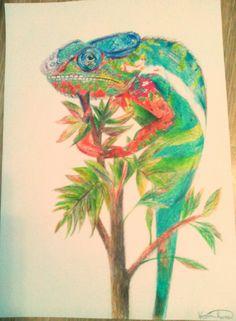 My chameleon :3