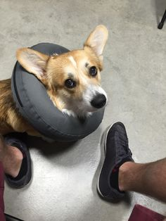 He cried with a cone so he got a inner tube.
