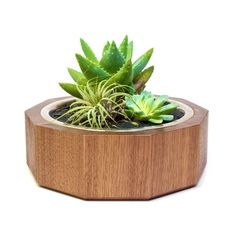 Oasis Desktop Planter
