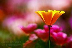 10 Tips for better flower photography.
