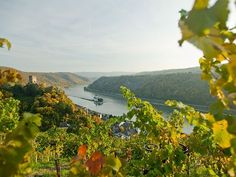 Wanderungen mit herrlicher Aussicht verspricht der Rheinsteig