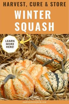 Learn how to harvest, cure, and store winter squash. You will learn when winter squash is ready to pick and how to cure it so that it will have a long storage life.