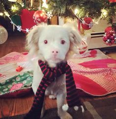 This albino puppy looks like Falcor from The NeverEnding Story