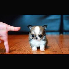 112 Best Cutest Things Ever Images Cute Puppies Cute Baby Dogs