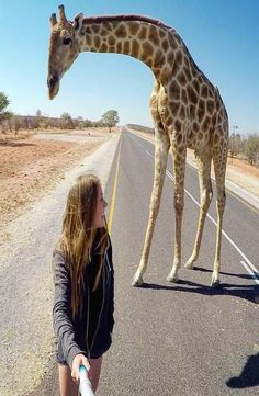 The himba village where the giraffe is living is located in Kamanjab, Namibia. This giraffe is tame and living with the traditional himba's. Backpacker, Beautiful Soul, Giraffe, Africa, Meet, Pictures, Animals, Traveling, Photos