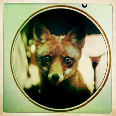 "witchofpositano: ""Foxy via Vali Myers: Drawings 1949-1979 """