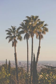 Los Angeles View #inspiration #palmtrees #California