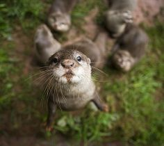 otters -- you just want to love them, and hug them and hold them tight.