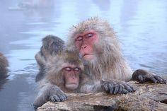 relaxing monkeys