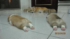 Dogs are now planking :D