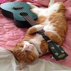 Kala Ukulele - Always Wanted To Learn Guitar? Funny Cats, Funny Animals, Cute Animals, Animals Images, Crazy Cat Lady, Crazy Cats, Arte Do Ukulele, Kala Ukulele, Kittens Cutest