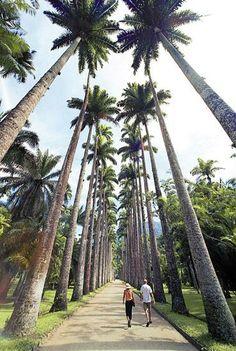 #DicadeTurismo Conhecer o Jardim Botânico do Rio de Janeiro é uma ótima opção de lazer para aqueles que querem contemplar a natureza.   Foto: brasil.gov.br