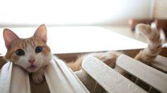 Heater & Cat