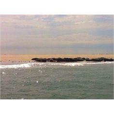 Waddenzee zeehonden