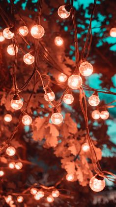 Wallpapers light emitting diode, lighting, christmas lights, branch, incandescen… – iPhone Wallpapers Vintage is not as old … Iphone Wallpaper Lights, Flower Phone Wallpaper, Iphone Background Wallpaper, Nature Wallpaper, Screen Wallpaper, Cool Wallpaper, Iphone Wallpapers, Aztec Wallpaper, Wallpaper Quotes