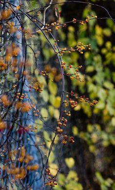Autumn beauty everywhere
