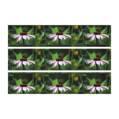 Coneflower  Canvas Print - triptych