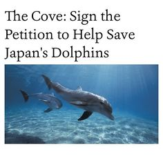 save taiji dolphins petition - Google Search