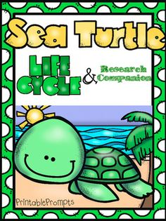 How Long do Tortoises Live? The Life of a Tortoise Sea Turtle Life Cycle, Ocean Turtle, Sea Turtles, Tiny Turtle, Turtle Information, Turtle Classroom, Turtle Book, Turtle Crafts, Ocean Unit