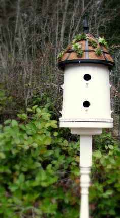 Got an old bucket? Reuse it by making a bird house with a rooftop of succulents. Think Green Birdhouse.