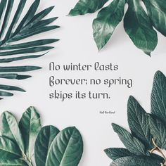 """""""No winter lasts forever; no spring skips its turn.""""⠀ Quotes about flowers Quotes about Spring"""