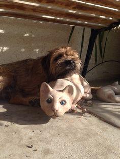 Jack The Border Terrier.