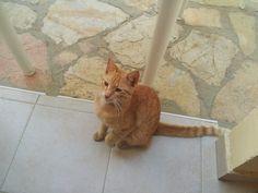 Ein gedi's cat