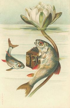 If I were a fish, with fish-feelings, i still would be playing the #accordion.