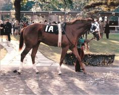 Secretariat as a at Champagne Stakes All The Pretty Horses, Beautiful Horses, Derby Horse, The Great Race, Sport Of Kings, Majestic Horse, Thoroughbred Horse, Racehorse, Animals And Pets