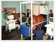 Large Animal Ultrasound at UC Davis.