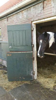 Paard op stal
