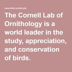 Birds.Cornell.edu/ The Cornell Lab of Ornithology is a world leader in the study, appreciation, and conservation of birds.