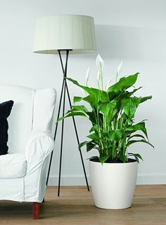 Classico Color Self Watering Planter: Simple in design yet advanced in functionality, the CLASSICO Color takes the round planter to a new level. The All-In-One CLASSICO Color is perfect for table and patio plants, indoors and out. Decorative Planters, Large Planters, Indoor Planters, Balcony Planters, Large Pots, Vertical Garden Planters, Self Watering Plants, Small Shrubs, Patio Plants