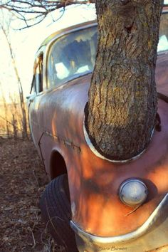 Abandoned car is slowly being taken back by nature with a tree growing straight through it. Abandoned Cars, Abandoned Buildings, Abandoned Places, Abandoned Vehicles, Derelict Places, Rust In Peace, Rusty Cars, Growing Tree, Barn Finds