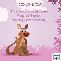 You know why kangaroos jump? #Facts #Kids #Knowledge #Kangaroo | Amazing Facts | Pinterest | Kangaroo jumps