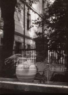 Josef Sudek (1896 - 1976) Zátiší se džbánem, květinami a sklenicí, 1969