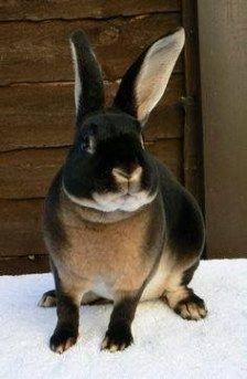 Handsome rabbit