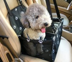 Perfect for Small and Medium Pets Clip-on Safety Leash Deluxe Dog Booster Car Seat Premium Quality Metal Frame Construction Breathable mesh