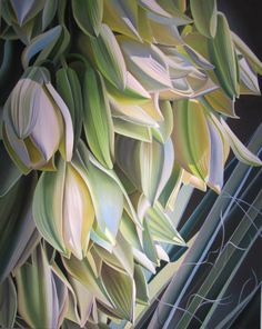 Arizona Flower Shower (Yucca Blooms at the desert Botanical Gardens) 60x48 oil on canvas Dyana Hesson