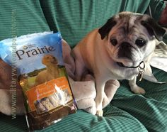Pug Posts: Chewy.com Nature's Variety Prairie Treats Review   AN AWESOME GIVEAWAY! (CLOSED - WINNER ANNOUNCED INSIDE!)