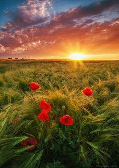 Sunset in the field, Krasnodar region Beautiful Photos Of Nature, Nature Pictures, Amazing Nature, Beautiful Landscapes, Beautiful Pictures, Amazing Photos, Landscape Photography, Nature Photography, Painted Cottage