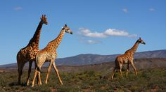 Snap the Big Five, and more, on a safari in South Africa's Sanbona Wildlife Reserve