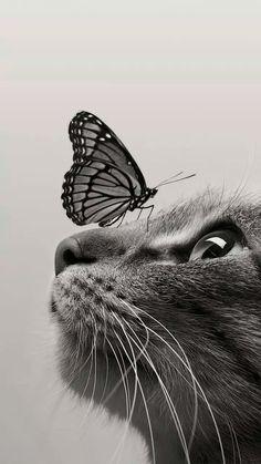 cat Wallpaper for smartphone Wallpaper Gatos, Cute Cat Wallpaper, Animal Wallpaper, Hippie Wallpaper, Cute Baby Cats, Cute Baby Animals, Animals And Pets, Funny Animals, Funny Cats