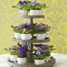 What a cute idea for house plants: African violets in teacups displayed on a tiered cupcake tray. What a cute idea for house plants: African violets in teacups displayed on a tiered cupcake tray. Indoor Garden, Indoor Plants, Outdoor Gardens, Decoration St Valentin, Tea Cup Display, Saintpaulia, Tiered Stand, Cactus Y Suculentas, Deco Table