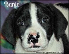 Banjo is adopted!