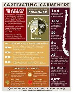 Carmenere infographic