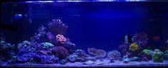 Oma akvaarioni - My own tank.