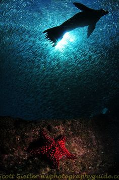 UWPG La Paz photo workshop 2011 Underwater Photography Guide